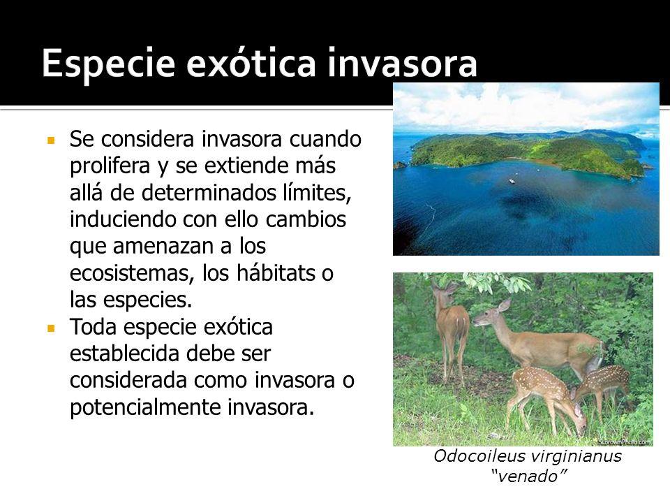 Especie exótica invasora