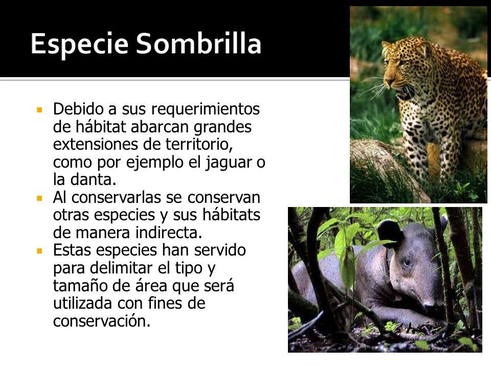 Especie Sombrilla Debido a sus requerimientos de hábitat abarcan grandes extensiones de territorio, como por ejemplo el jaguar o la danta.