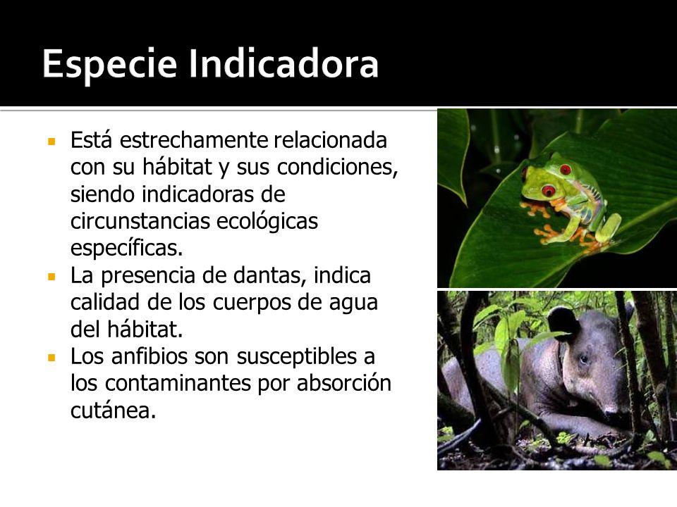 Especie Indicadora Está estrechamente relacionada con su hábitat y sus condiciones, siendo indicadoras de circunstancias ecológicas específicas.