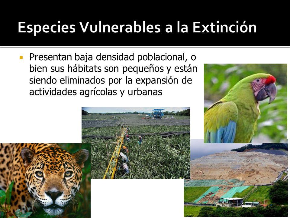 Especies Vulnerables a la Extinción