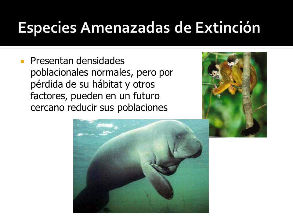 Especies Amenazadas de Extinción
