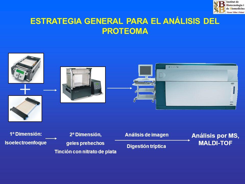 ESTRATEGIA GENERAL PARA EL ANÁLISIS DEL PROTEOMA