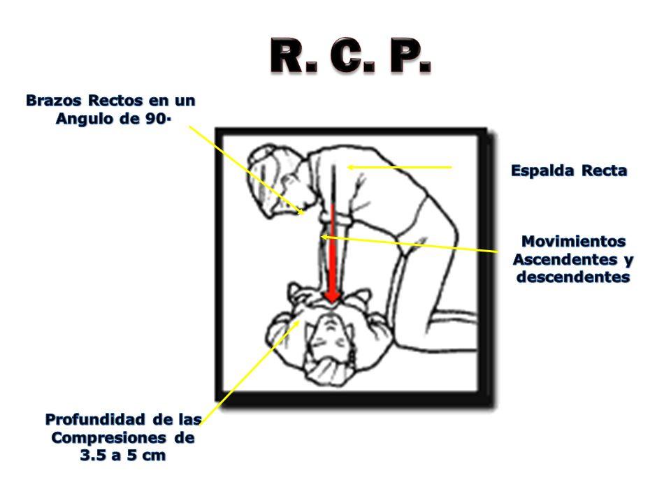 R. C. P. Espalda Recta Brazos Rectos en un Angulo de 90· Movimientos