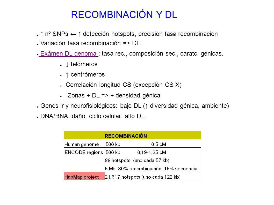 RECOMBINACIÓN Y DL ↑ nº SNPs ↔ ↑ detección hotspots, precisión tasa recombinación. Variación tasa recombinación => DL.
