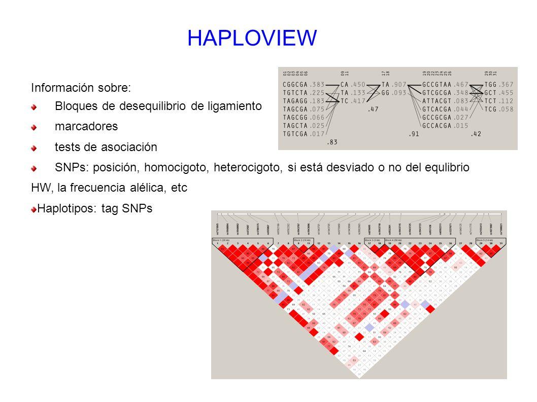 HAPLOVIEW Información sobre: Bloques de desequilibrio de ligamiento
