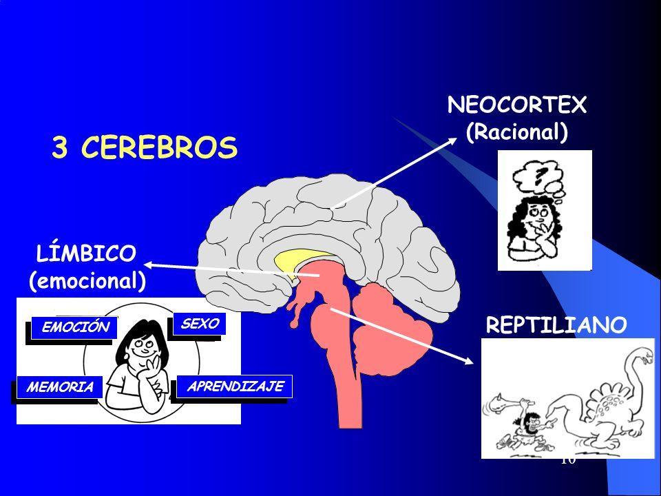 3 CEREBROS NEOCORTEX (Racional) LÍMBICO (emocional) REPTILIANO