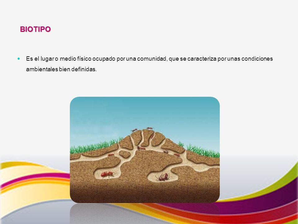 BIOTIPO Es el lugar o medio físico ocupado por una comunidad, que se caracteriza por unas condiciones ambientales bien definidas.