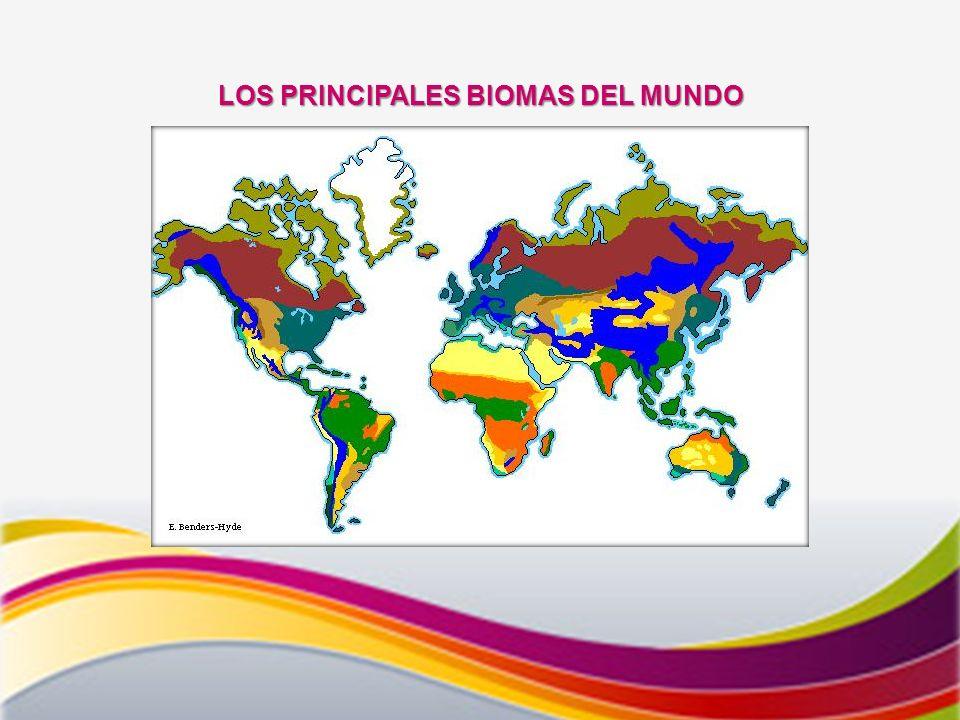 LOS PRINCIPALES BIOMAS DEL MUNDO