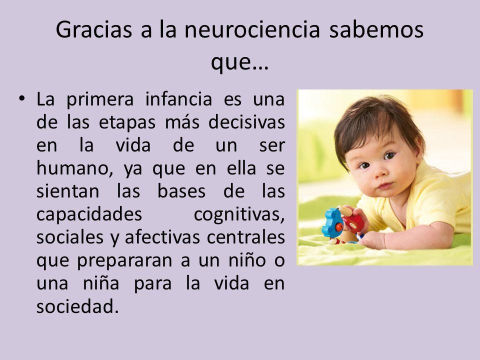 Gracias a la neurociencia sabemos que…