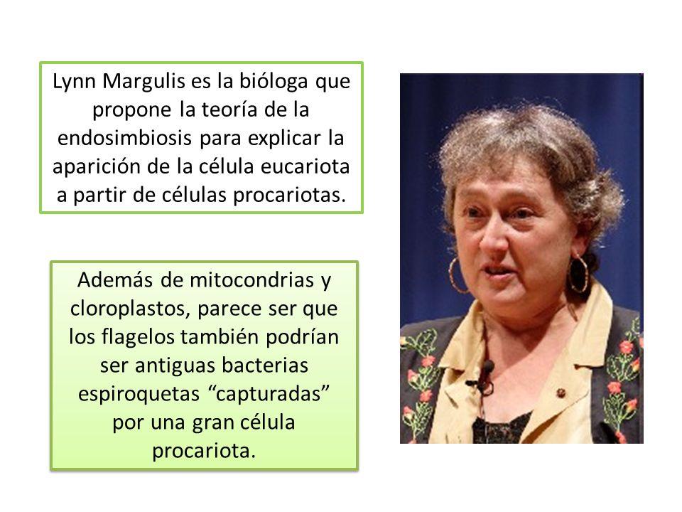 Lynn Margulis es la bióloga que propone la teoría de la endosimbiosis para explicar la aparición de la célula eucariota a partir de células procariotas.