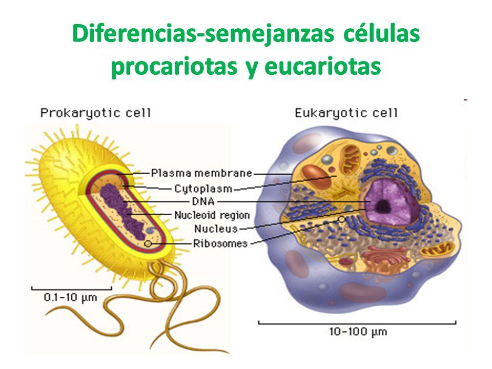 Diferencias-semejanzas células procariotas y eucariotas