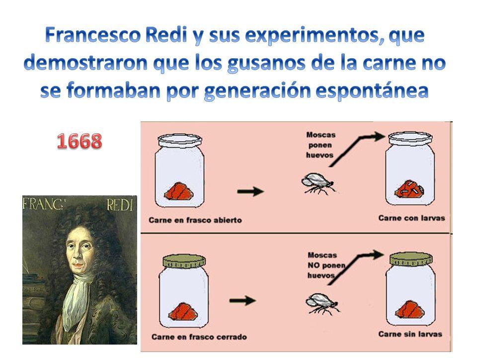 Francesco Redi y sus experimentos, que demostraron que los gusanos de la carne no se formaban por generación espontánea