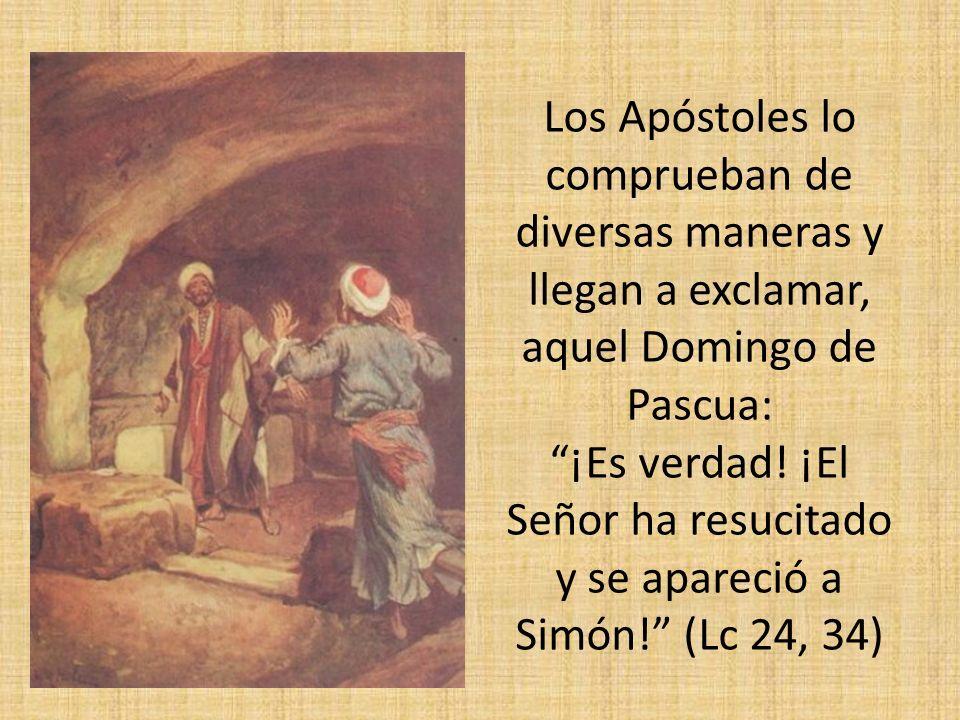 Los Apóstoles lo comprueban de diversas maneras y llegan a exclamar, aquel Domingo de Pascua: ¡Es verdad.