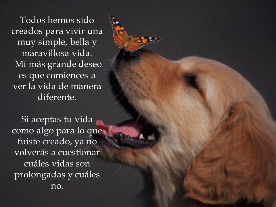 Todos hemos sido creados para vivir una muy simple, bella y maravillosa vida.