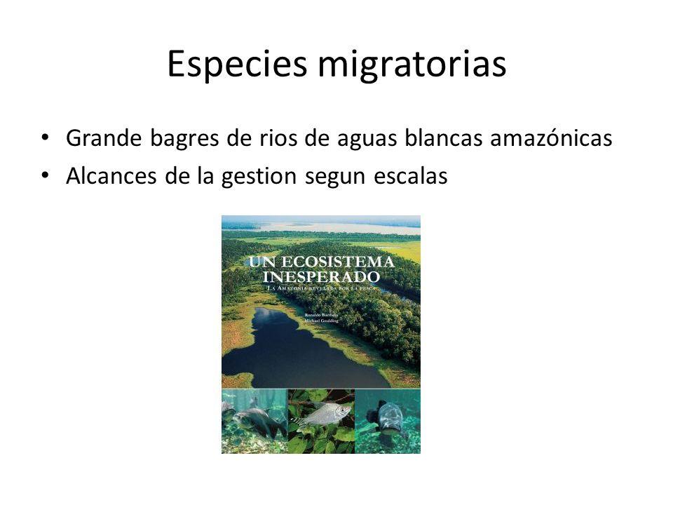 Especies migratorias Grande bagres de rios de aguas blancas amazónicas