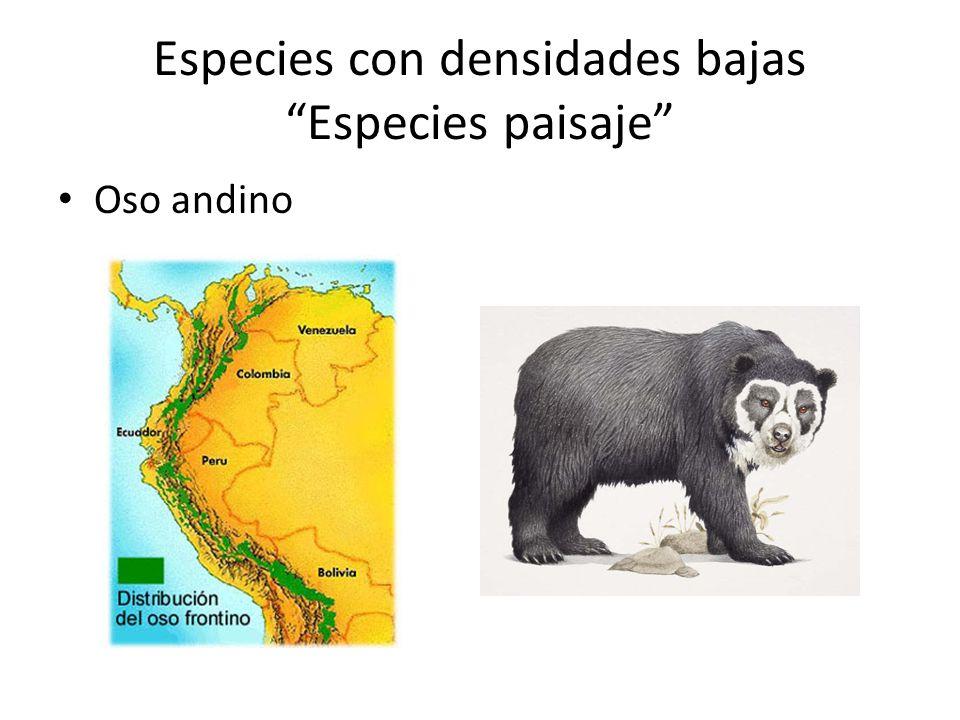 Especies con densidades bajas Especies paisaje