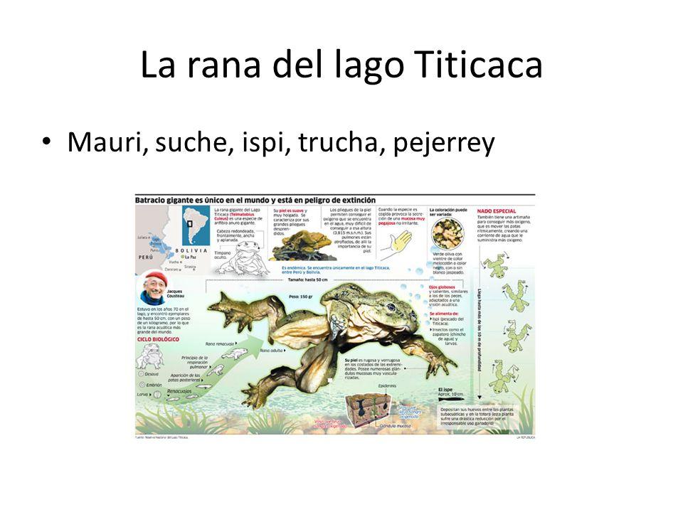 La rana del lago Titicaca