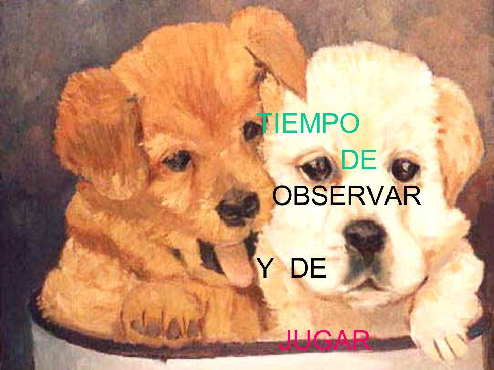TIEMPO DE OBSERVAR Y DE JUGAR
