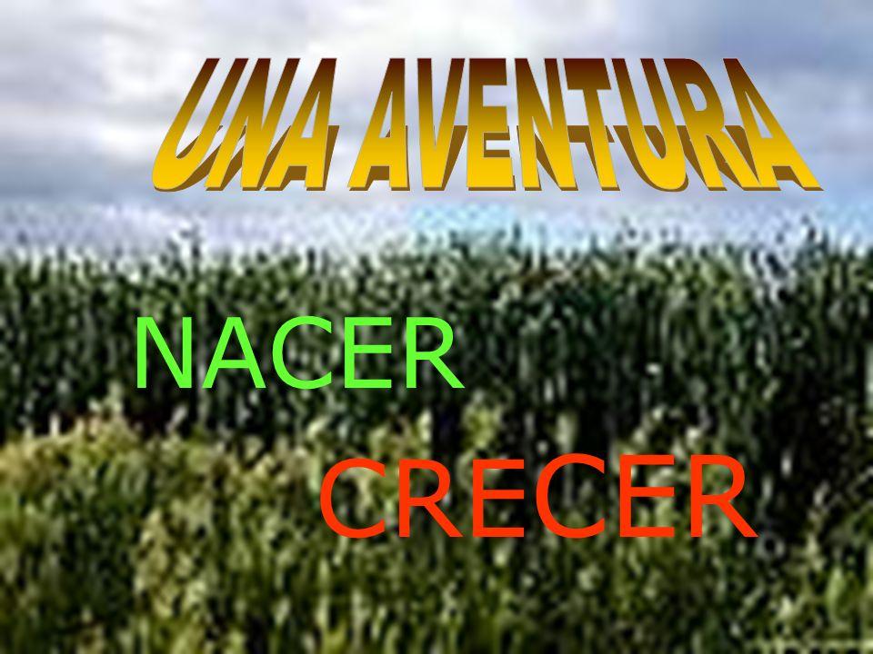 UNA AVENTURA NACER CRECER
