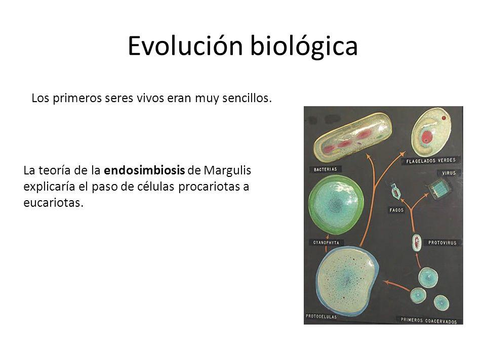 Evolución biológica Los primeros seres vivos eran muy sencillos.