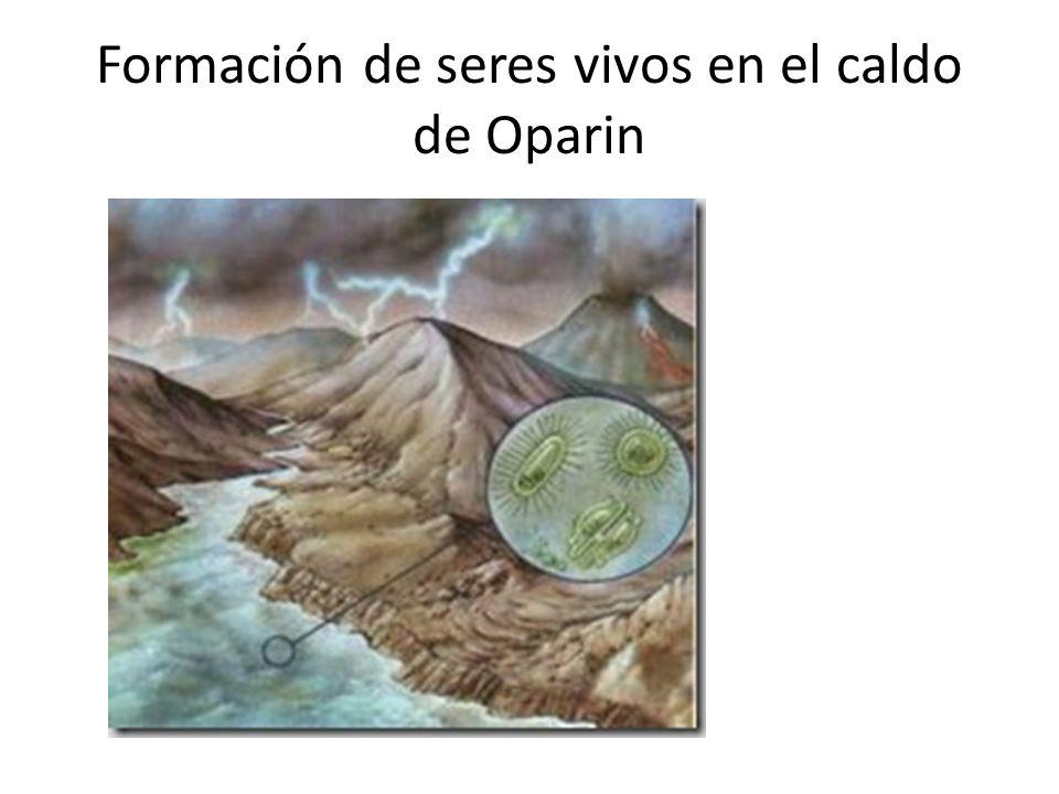 Formación de seres vivos en el caldo de Oparin
