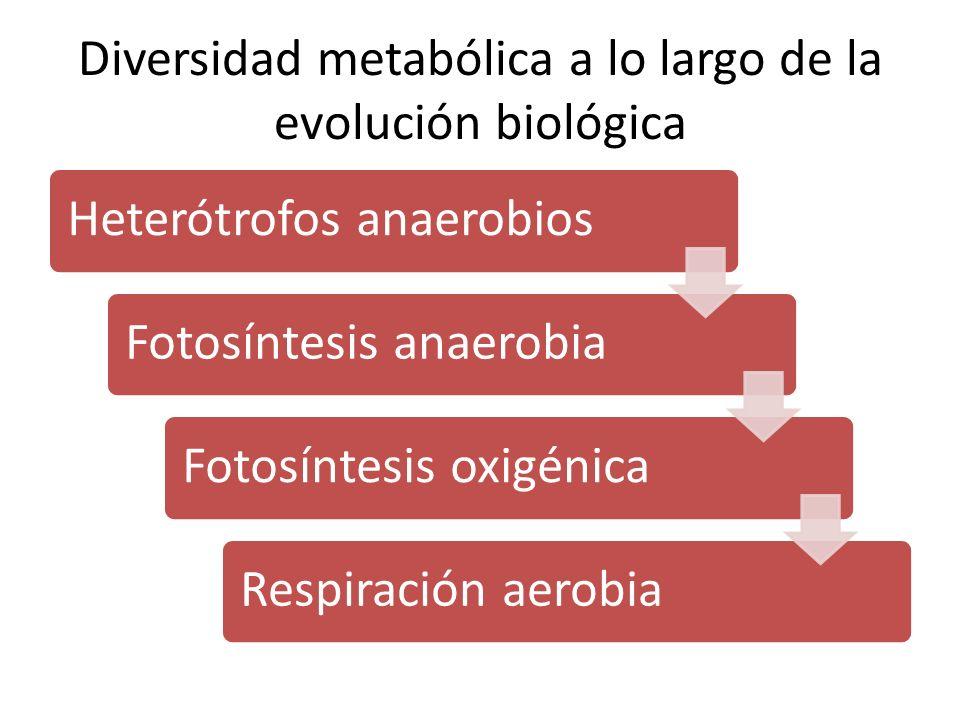 Diversidad metabólica a lo largo de la evolución biológica
