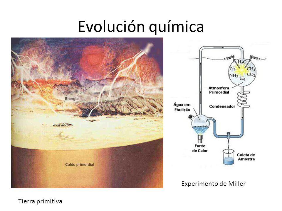 Evolución química Experimento de Miller Tierra primitiva