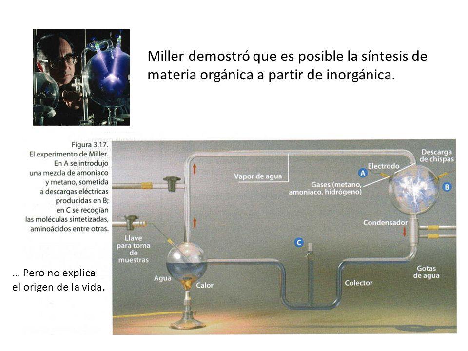 Miller demostró que es posible la síntesis de materia orgánica a partir de inorgánica.
