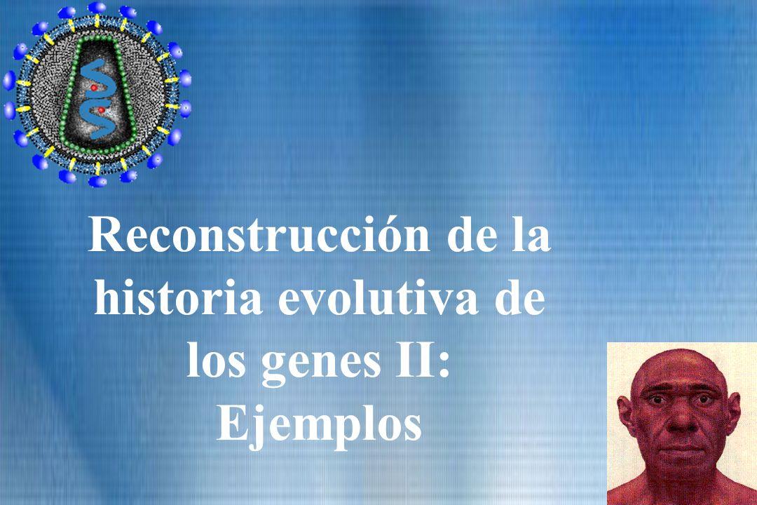 Reconstrucción de la historia evolutiva de los genes II: Ejemplos