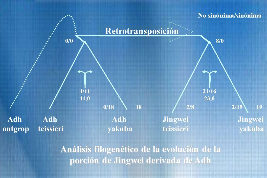 No sinónima/sinónima Retrotransposición. 0/0. 8/0. 4/11. 11,0. 21/16. 23,0. 0/18. 18. 2/8.