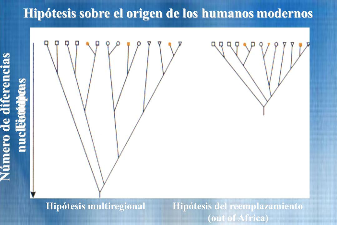Hipótesis sobre el origen de los humanos modernos