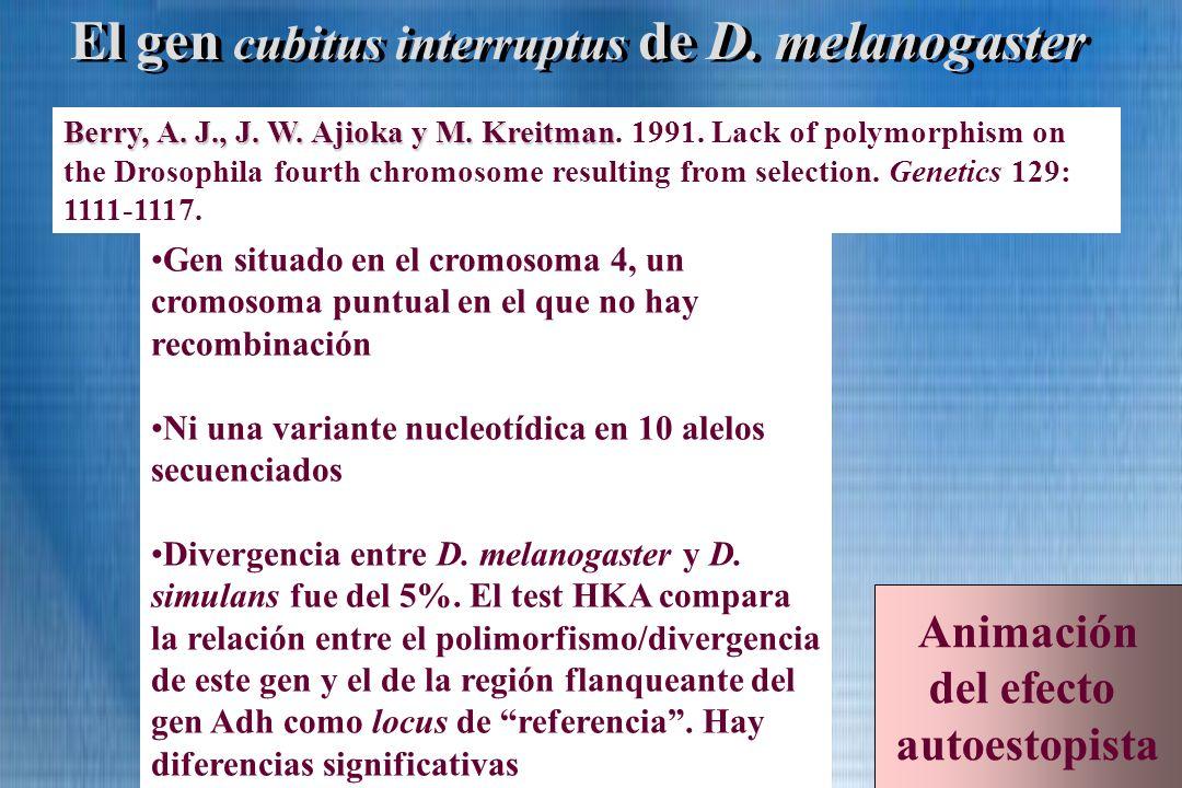 El gen cubitus interruptus de D. melanogaster