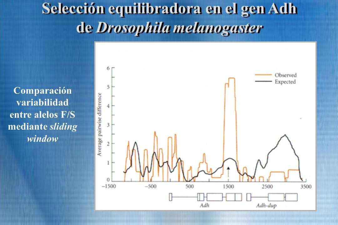 Selección equilibradora en el gen Adh de Drosophila melanogaster