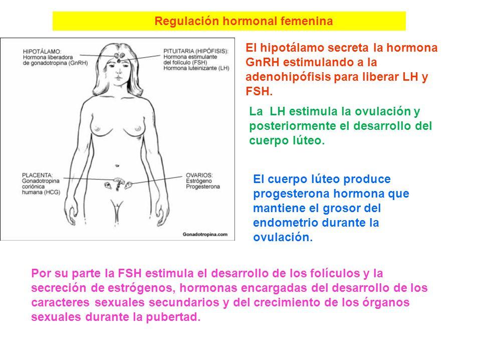 Regulación hormonal femenina
