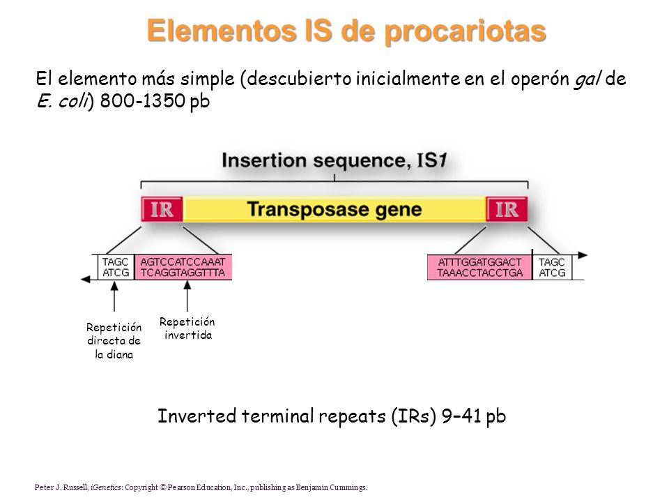 Elementos IS de procariotas