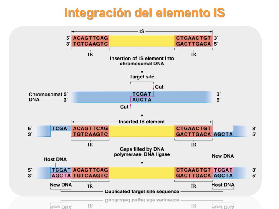 Integración del elemento IS