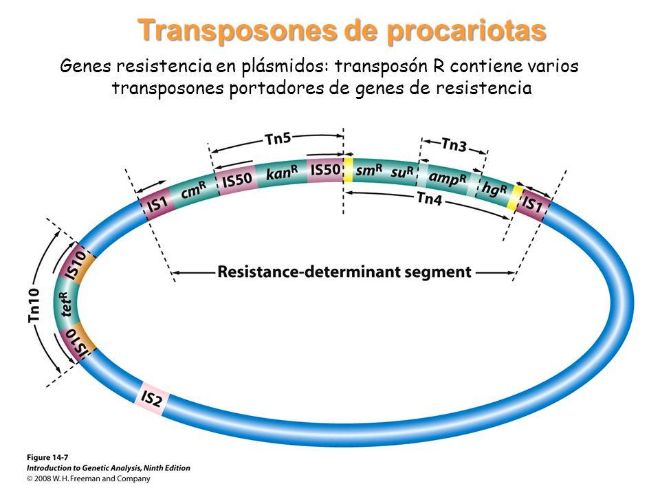 Transposones de procariotas
