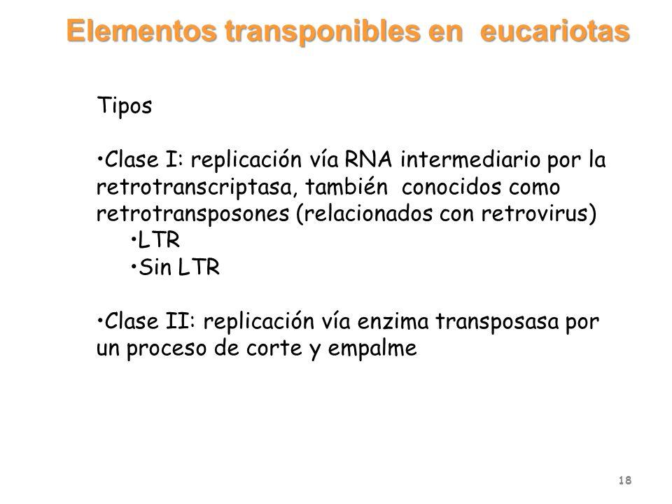 Elementos transponibles en eucariotas