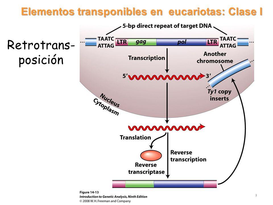 Elementos transponibles en eucariotas: Clase I