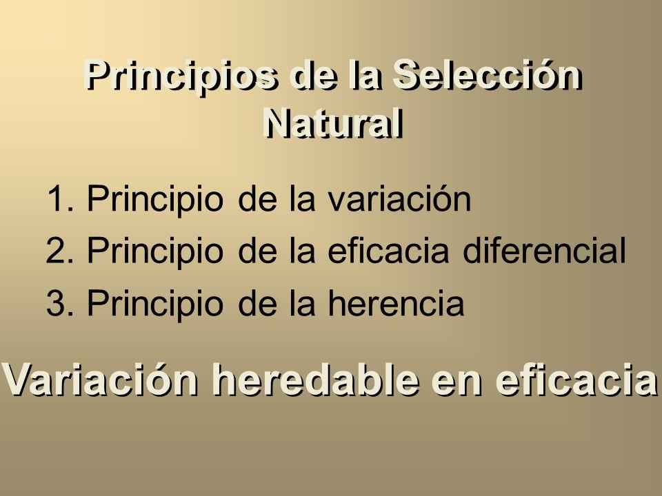 Principios de la Selección Natural