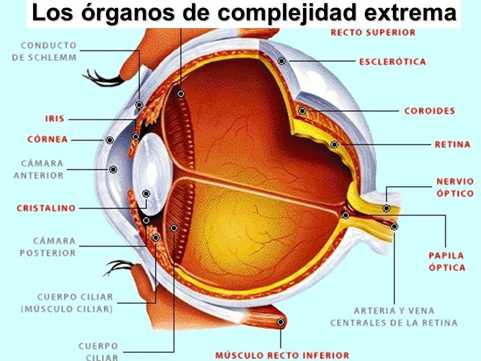 Los órganos de complejidad extrema
