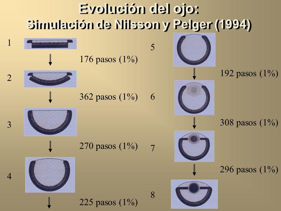 Evolución del ojo: Simulación de Nilsson y Pelger (1994)