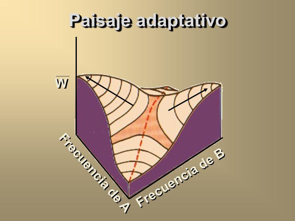 Paisaje adaptativo W Frecuencia de A Frecuencia de B