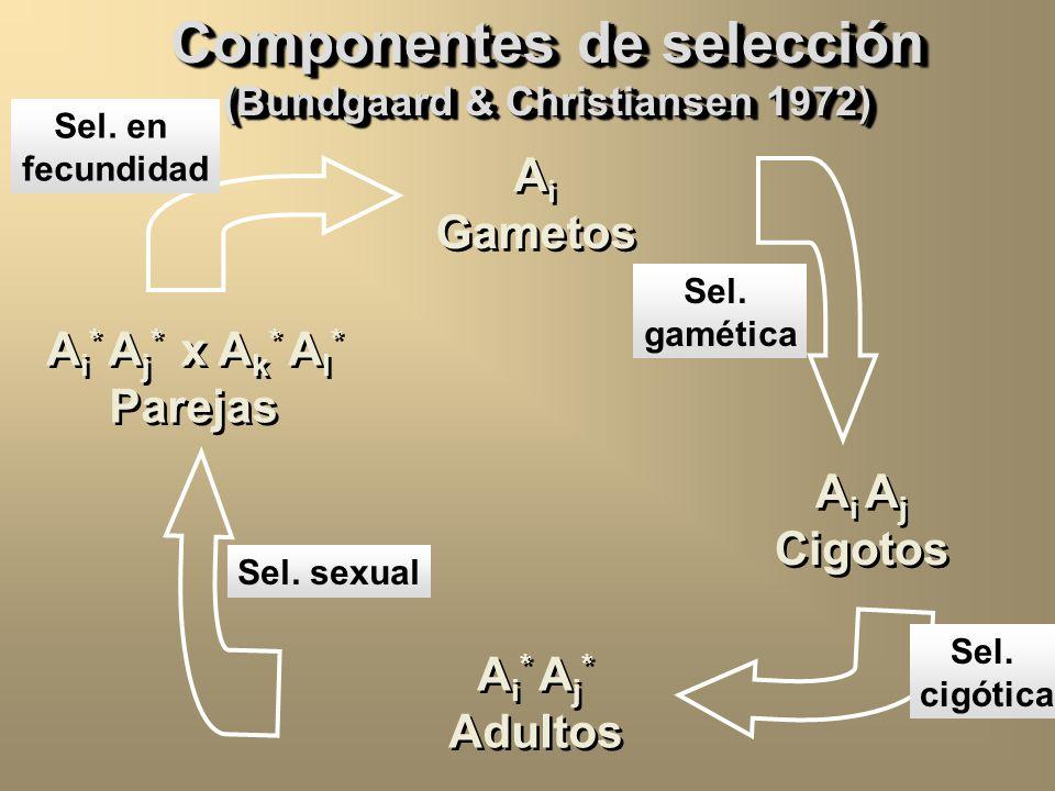 Componentes de selección (Bundgaard & Christiansen 1972)