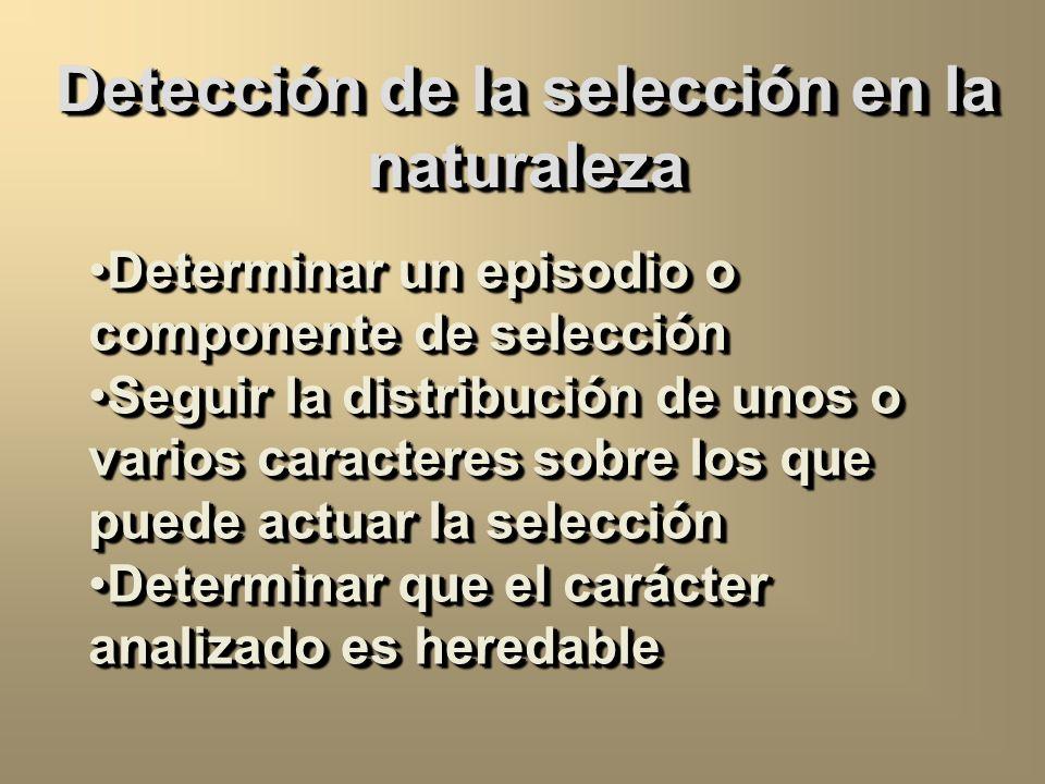 Detección de la selección en la naturaleza