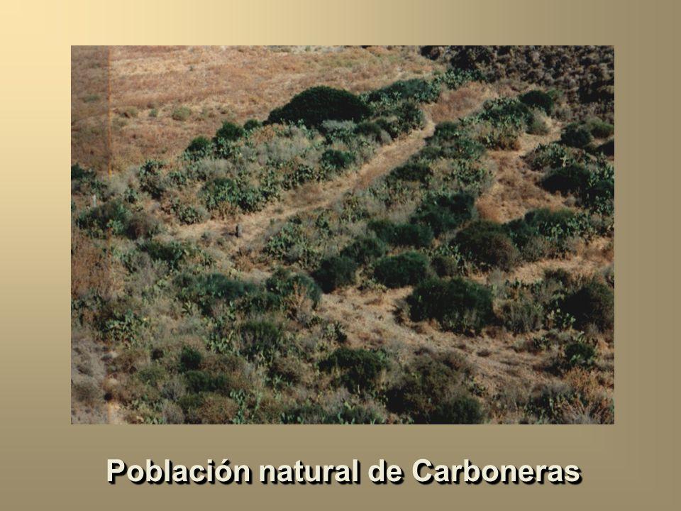 Población natural de Carboneras