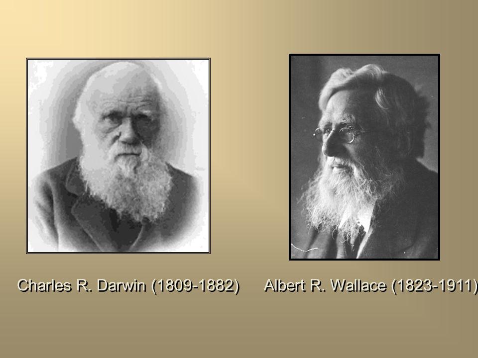Charles R. Darwin (1809-1882) Albert R. Wallace (1823-1911)