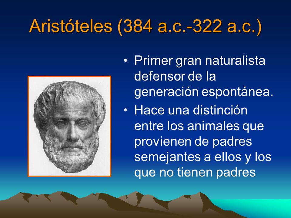 Aristóteles (384 a.c.-322 a.c.) Primer gran naturalista defensor de la generación espontánea.