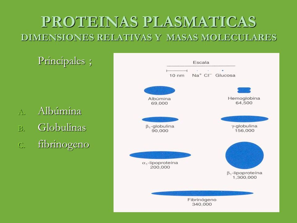 PROTEINAS PLASMATICAS DIMENSIONES RELATIVAS Y MASAS MOLECULARES