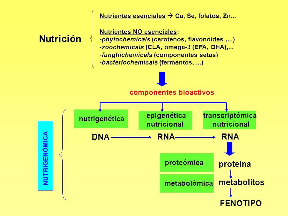 Nutrición DNA RNA proteina metabolitos FENOTIPO componentes bioactivos